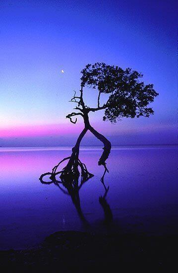 Dancing human tree at night