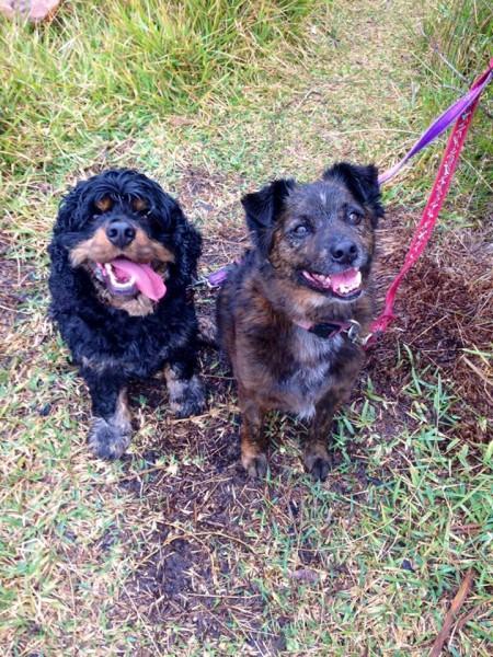 Benji & Charlie