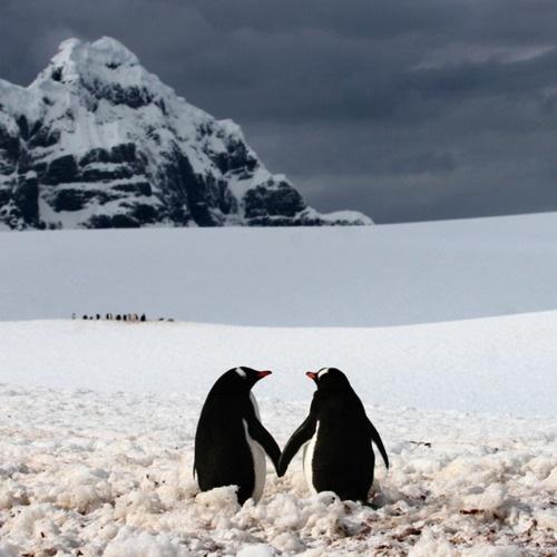 penguinsbuzzfeed